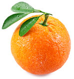 Orange with leaves on a white background. royalty free stock image