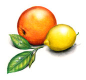 Orange and lemon. Still-life hand drawn with colored pencils royalty free illustration