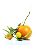 Orange and lemon Stock Photography
