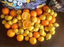 Orange&lemon arkivfoton