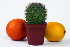 Orange,lemon and cactus. Isolated on the white background Stock Images