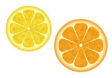 Orange and lemon vector illustration