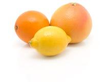 Orange, lemon and grapefruit Stock Photography