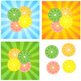 Orange,lemon,lime,grapefruit Stock Image