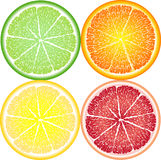 Orange, lemon, lime and grapefruit in a close-up section. Citrus Stock Images