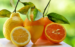 Orange and lemon slice. Stock Image