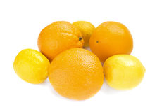 Orange and lemons Stock Photography