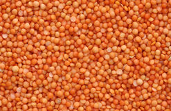 Orange lentils Stock Image