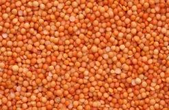 Orange lentils. A background filled with orange lentils Stock Image