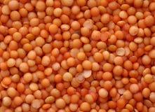 Orange lentils. A background filled with delicate orange lentil seeds Royalty Free Stock Photography