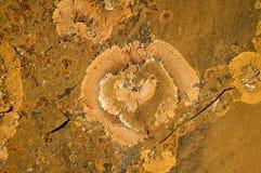 Orange Lichen 1. Orange lichen growing on rock Stock Image