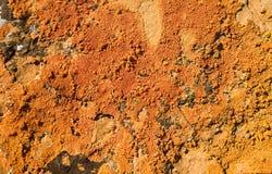 Orange Lichen 3. Orange lichen growing on sandstone Stock Photo