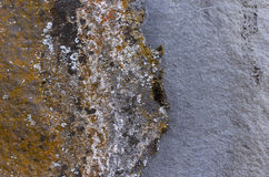 Orange Lichen On Gray Rock Background Royalty Free Stock Photos
