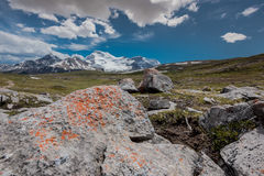 Orange Lichen Grow Upon Rocks on Wilcox Pass. With Columbia Icefields in background royalty free stock image