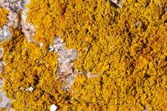 Orange lichen on pink granite. Stock Photo