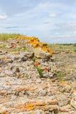 Orange lichen on rocks. In Santiago do Cacem, Alentejo, Portugal royalty free stock images