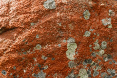 Orange lichens Royalty Free Stock Photo