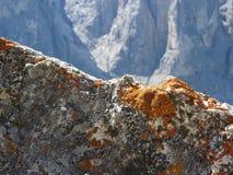 Orange lichens growing on rock face . Sesto Dolomites, South Tyrol - Alto Adige , Italy.  stock image