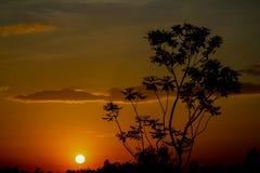 Orange Licht des Sonnenuntergangs und Baumschattenbild Stockfotografie