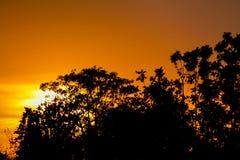 Orange Licht des Sonnenuntergangs und Baumschattenbild Stockfoto