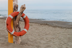 Orange lifebuoy hanging on a dry dead trunk on a beach Royalty Free Stock Photos