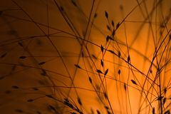 Orange light. Abstract background with golden orange light Stock Photography