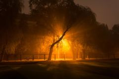Misty light royalty free stock photo