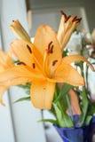 Orange Lilie Stockbild