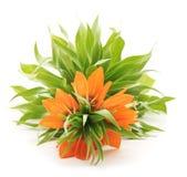 Orange lilie. Royalty Free Stock Photo