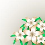 Orange Lilien-Hintergrund Stockfoto