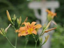 Orange Lilienblume mit hölzernem Kreuz auf Hintergrund Stockfoto
