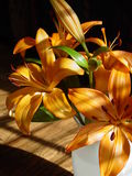 Orange Lilies Royalty Free Stock Image