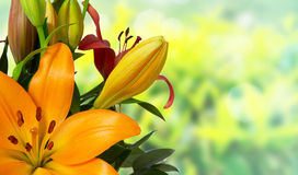 Orange lilies flower bouquet Royalty Free Stock Photos