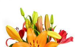 Orange lilies flower bouquet isolated Stock Photos