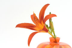 Orange lilly Stock Image
