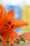 Orange lily. With a remedies for aroma therapy in spa stock image