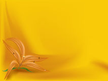 Orange lily on the curtained background Royalty Free Stock Photography