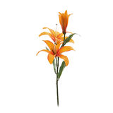Orange lily Royalty Free Stock Image