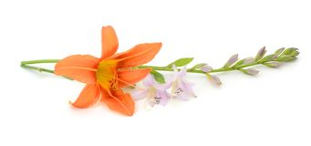 Orange lily flower Stock Image