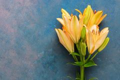 Orange Lily flower on blue abstract background. Flat lay of the copy space. Beautiful art image. Orange Lily flower on blue abstract background. Flat lay of the stock photo