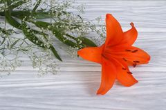 Orange lily flower framed by gypsophila on a wooden Stock Photos