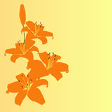 orange lily flower vector background Stock Photo