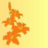 Orange lily flower vector background Stock Photo