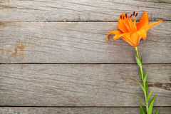 Orange lily flower Royalty Free Stock Photos
