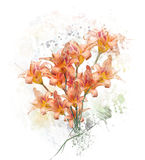 Orange Lily Flowers Watercolor Royalty Free Stock Photography