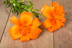 Orange lily flowers on a wooden table Stock Image