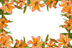 Orange lily frame Stock Photos