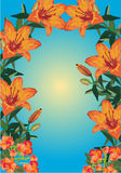 Orange lily frame on blue background Stock Photos