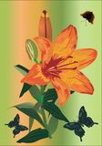 Orange lily and three butterflies Royalty Free Stock Image