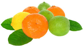 Orange, lime and lemon. Royalty Free Stock Image